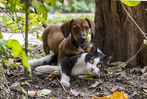 Hond en kat in het bos