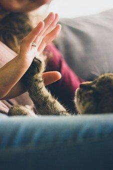 Primaire foto; Kat, poot en hand