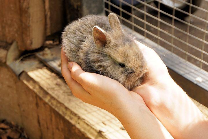 rabbit-1436329__480